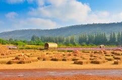 Het landbouwbedrijf van pompoenen royalty-vrije stock afbeelding