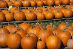 Het Landbouwbedrijf van pompoenen, Voedsel, de Herfst van de Daling van de Pompoen van Halloween Stock Foto