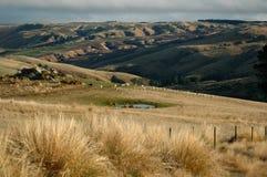 Het Landbouwbedrijf van schapen Stock Afbeelding