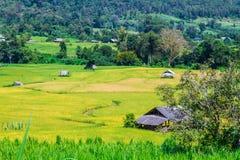 Het landbouwbedrijf van Thai Stock Afbeelding