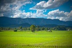 Het landbouwbedrijf van Thai Stock Foto
