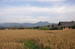 Het landbouwbedrijf van Thai stock afbeeldingen