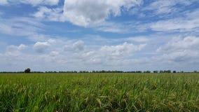 Het landbouwbedrijf van Thai Royalty-vrije Stock Foto
