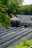 Het Landbouwbedrijf van Wasabi royalty-vrije stock afbeelding