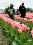 Het landbouwbedrijfarbeiders van de tulp Stock Afbeeldingen