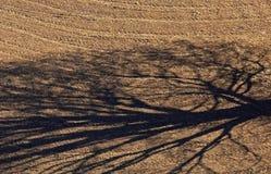 Het Landbouwbedrijfgebied van de boomschaduw royalty-vrije stock afbeelding
