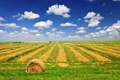 Het landbouwbedrijfgebied van de tarwe bij oogst Stock Afbeeldingen