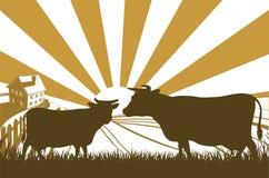 Het Landbouwbedrijflandschap van de zonsopgangkoe royalty-vrije illustratie