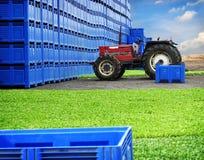 Het landbouwbedrijfproductie van het land stock foto