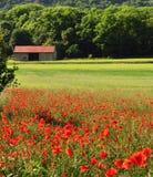 Het landbouwbedrijfseizoen van de zomer Royalty-vrije Stock Afbeeldingen
