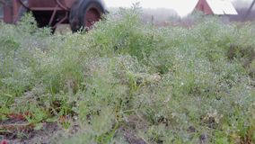 Het landbouwbedrijfwerk in de ochtend stock videobeelden