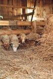 Het landbouwersleven Stock Afbeeldingen