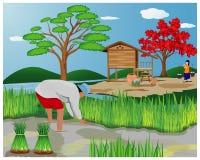 Het landbouwerswerk op padiegebied vector illustratie