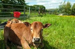 Het landbouwlandschap van Engeland in de zomer Royalty-vrije Stock Fotografie