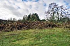 Het landelijke land van het gebiedsgras met struiken en struiken stock foto