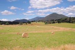 Het landelijke landbouwbedrijf van het land en bushland in de recente middagzon stock foto