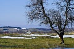 Het landelijke landschap van de lente met een boom Stock Afbeeldingen