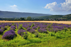 Het landelijke landschap van de Provence Royalty-vrije Stock Foto's
