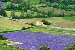 Het landelijke landschap van de Provence Stock Afbeeldingen