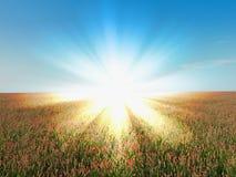 Het landelijke landschap van het zonlicht Royalty-vrije Stock Afbeeldingen