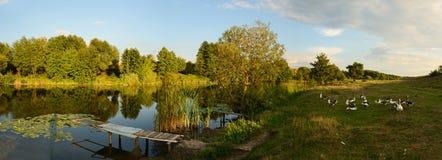 Het landelijke landschap van zonsondergangganzen Royalty-vrije Stock Afbeelding