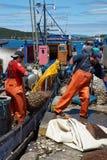 Het landen Tweekleppige schelpdieren Stock Fotografie