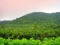 Het landgoed van de arekanoot, Kerala Stock Afbeelding