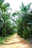 Het Landgoed van de Palm van de olie royalty-vrije stock foto's