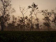 Het landgoed van de thee Stock Foto