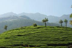 Het Landgoed van de thee van Kerala stock afbeelding