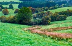 Het landlandschap van de herfst stock afbeelding