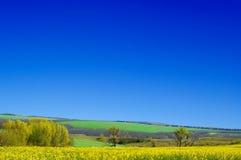 Het landschap. Stock Fotografie