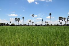 Het landschap is alle zichtbare die eigenschappen van een gebied van platteland of land, vaak in termen van hun esthetisch beroep royalty-vrije stock afbeeldingen