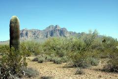 Het landschap Arizona van de woestijn Stock Foto