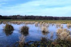 Het landschap, de winterscène van de bevroren vijver Stock Afbeelding