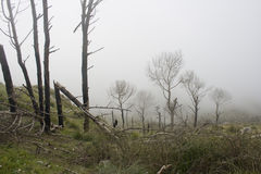 Het landschap en de mist van de berg Stock Foto's