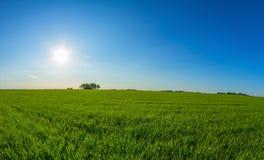 Het landschap en de zon van de lente Royalty-vrije Stock Foto's