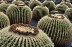 Het landschap Lanzarote van DE cactus van Jardin Stock Foto