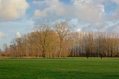 Het landschap met Groene weide met acerbomen en pollarded wilgen in Vlaanderen royalty-vrije stock foto