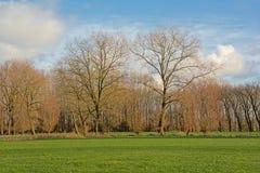 Het landschap met Groene weide met acerbomen en pollarded wilgen in Vlaanderen royalty-vrije stock afbeelding