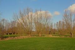 Het landschap met Groene weiden en pollarded wilgen in Vlaanderen stock afbeeldingen