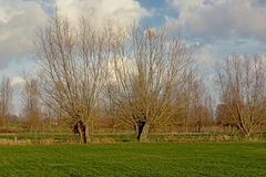 Het landschap met Groene weiden en pollarded wilgen in Vlaanderen stock fotografie