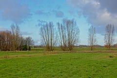 Het landschap met Groene weiden en pollarded wilgen in Vlaanderen stock foto