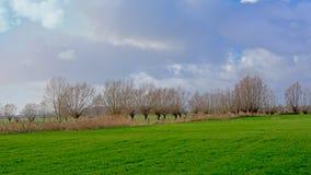 Het landschap met Groene weiden en pollarded wilgen in Vlaanderen stock foto's