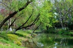 Het landschap in het park Royalty-vrije Stock Fotografie