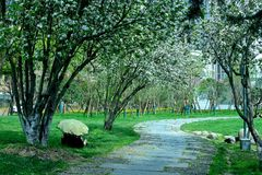 Het landschap in het park Stock Foto
