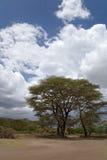 Het landschap van Afrika stock foto's