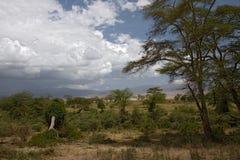 Het landschap van Afrika, ngorongoro Stock Foto's