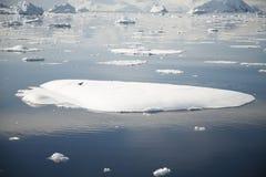 Het Landschap van Antarctica Stock Afbeelding