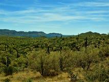 Het landschap van Arizona en kunstmatig meer stock foto's